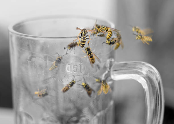 Swarm of Wasps in empty glass of beer stock photo