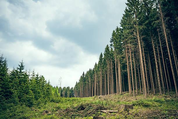 striscia attraverso la foresta - industria forestale foto e immagini stock