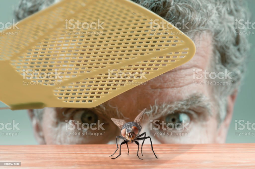 Swatting the fly stock photo