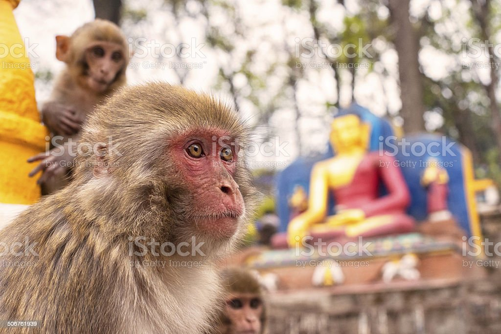 Swayambhunath Stupa,Nepal stock photo