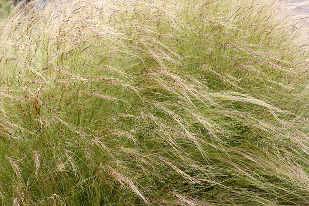 swaying grass stock photo