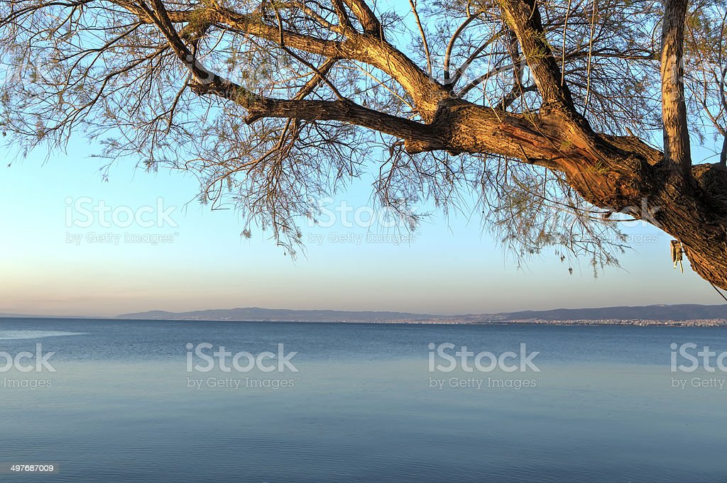 Swaying tree over the ocean .Tonemapped HDR image. stock photo