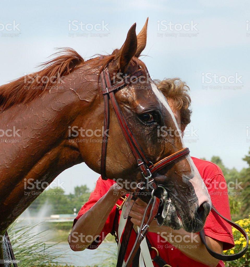 Sweaty Horse stock photo