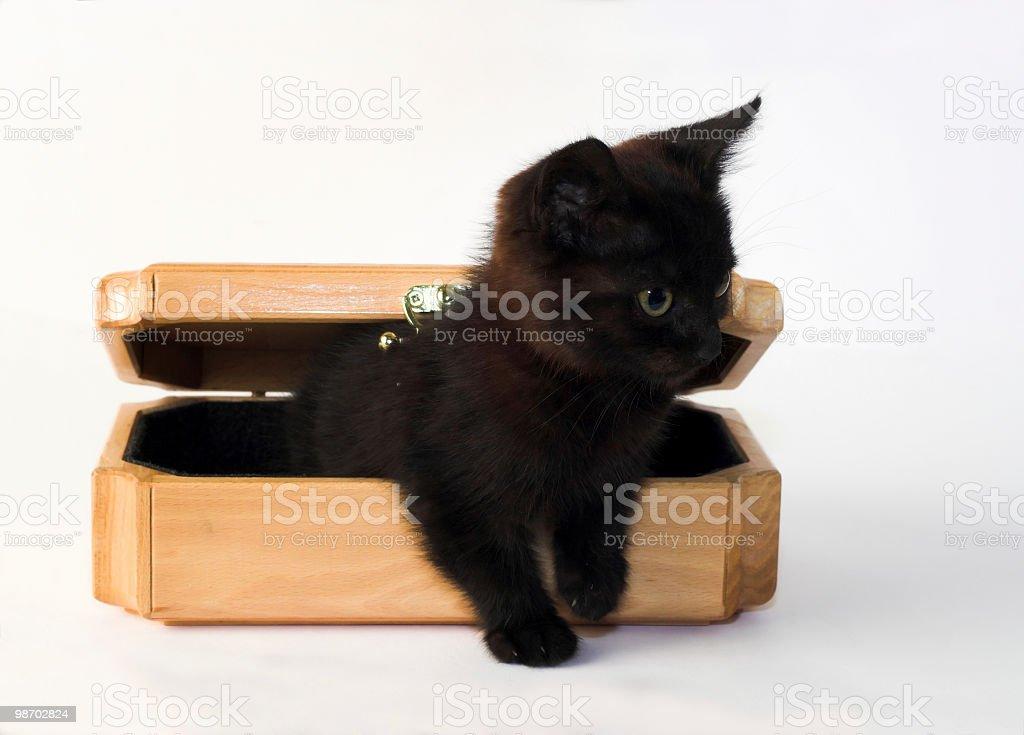 발한 kitty royalty-free 스톡 사진