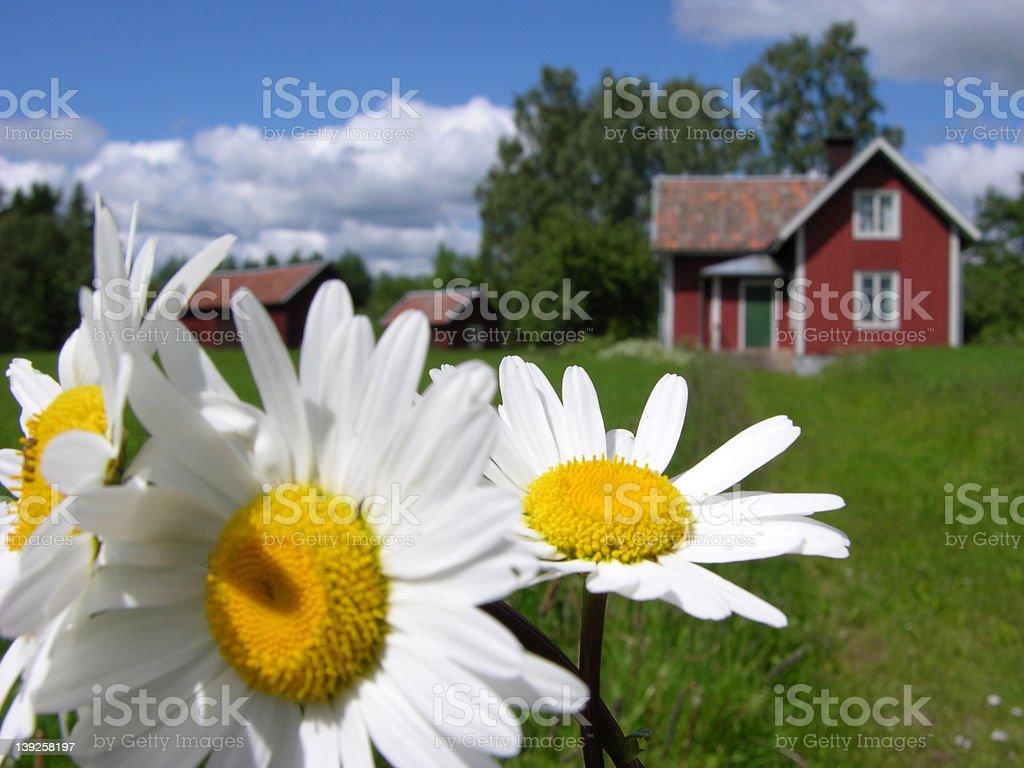 sweden farmy royalty-free stock photo
