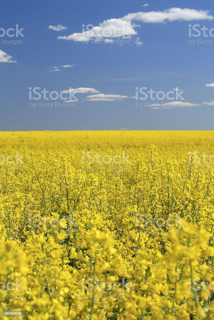 Swedish and sky royalty-free stock photo