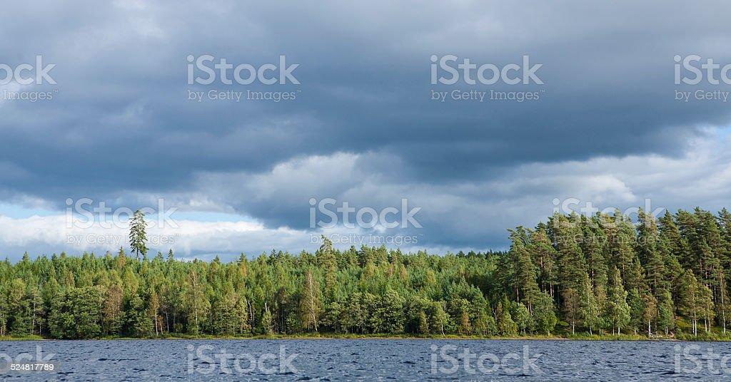 Swedish forest stock photo