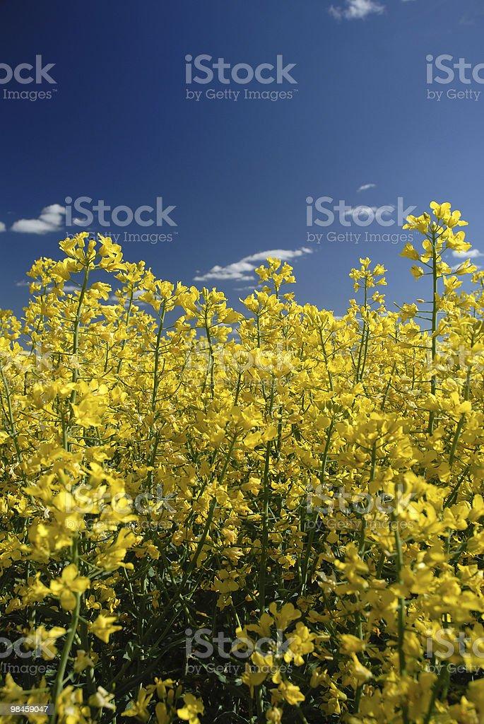 Swedish on a sky background royalty-free stock photo