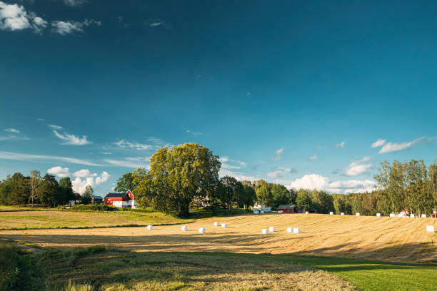 Swedish Rural Landscape Field Meadow With Dry Hay Bales During Harvest In Sunny Evening.  Farmland With Red Farm Barn stock photo