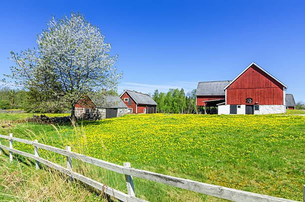 Swedish spring farm with traditional fence stock photo