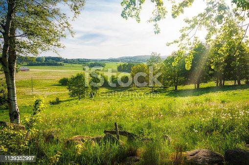 Summer landscape scenery with birch trees, gossamer light and romantic emotional light
