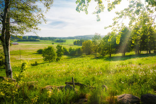 Swedish summer scenery stock photo