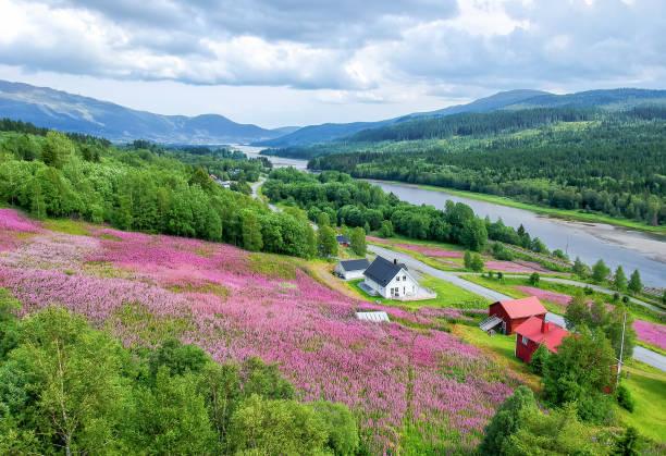 Swedish summer valley stock photo