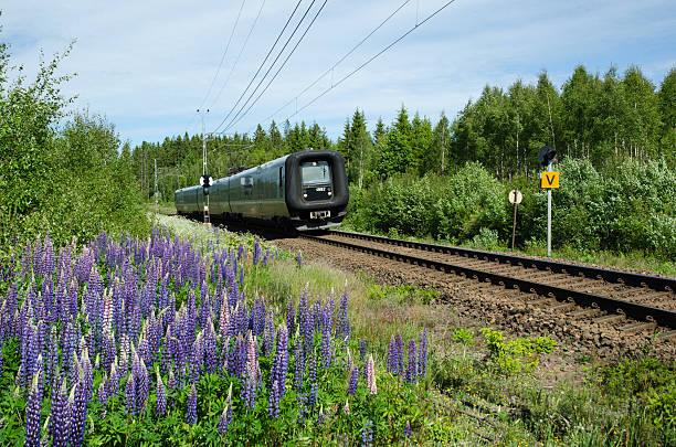 swedish train in a summer landscape - öresund bildbanksfoton och bilder