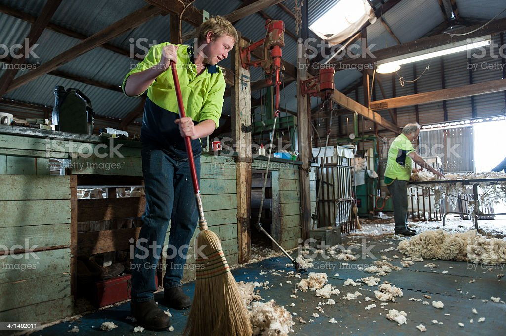 Sweeping and Sorting after shearing stock photo
