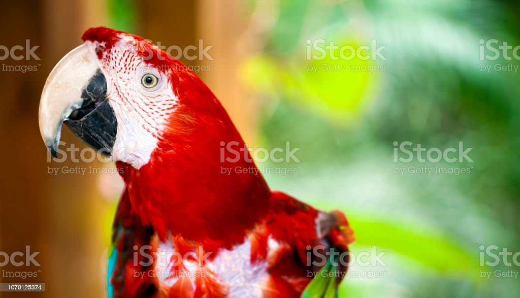 Sweet Animal Bird Colorful Exotic Tropical Parrot Photo