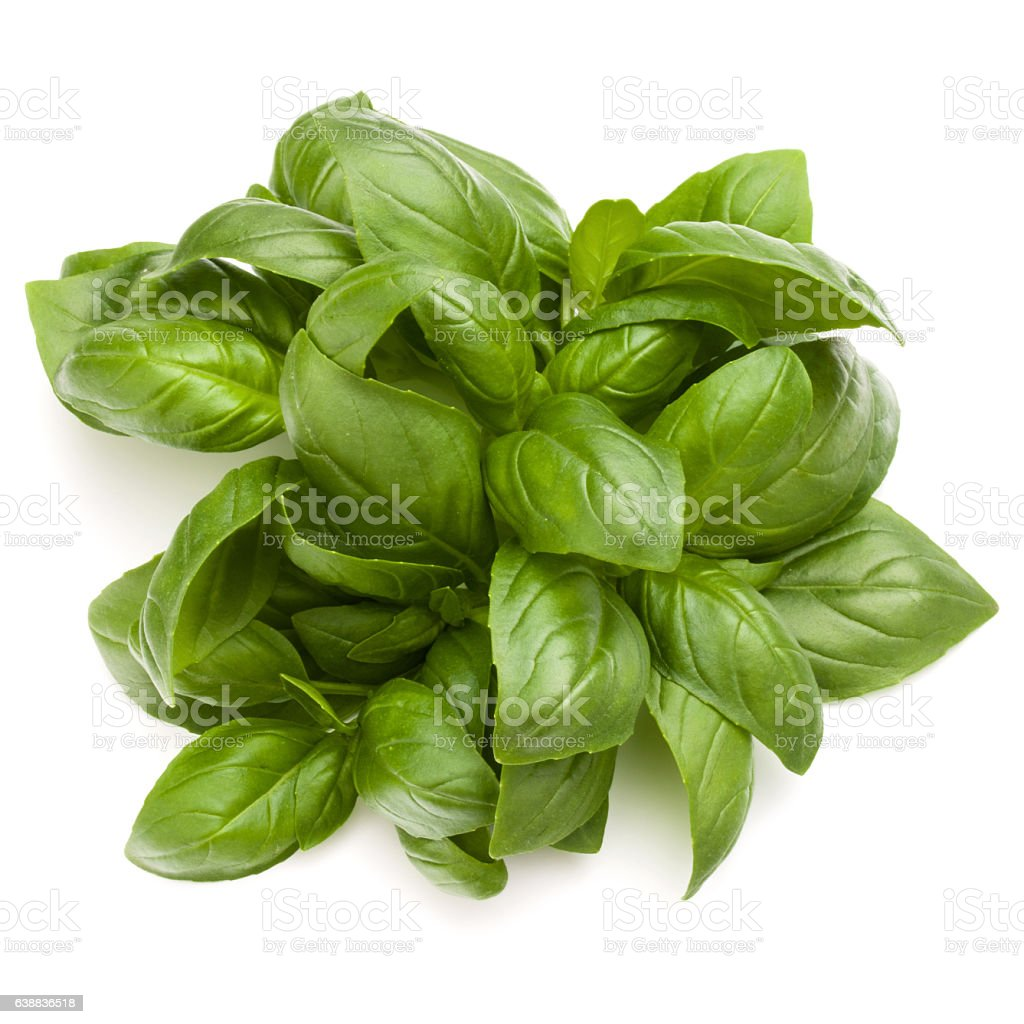 Sweet basil herb leaves bunch isolated on white background​​​ foto