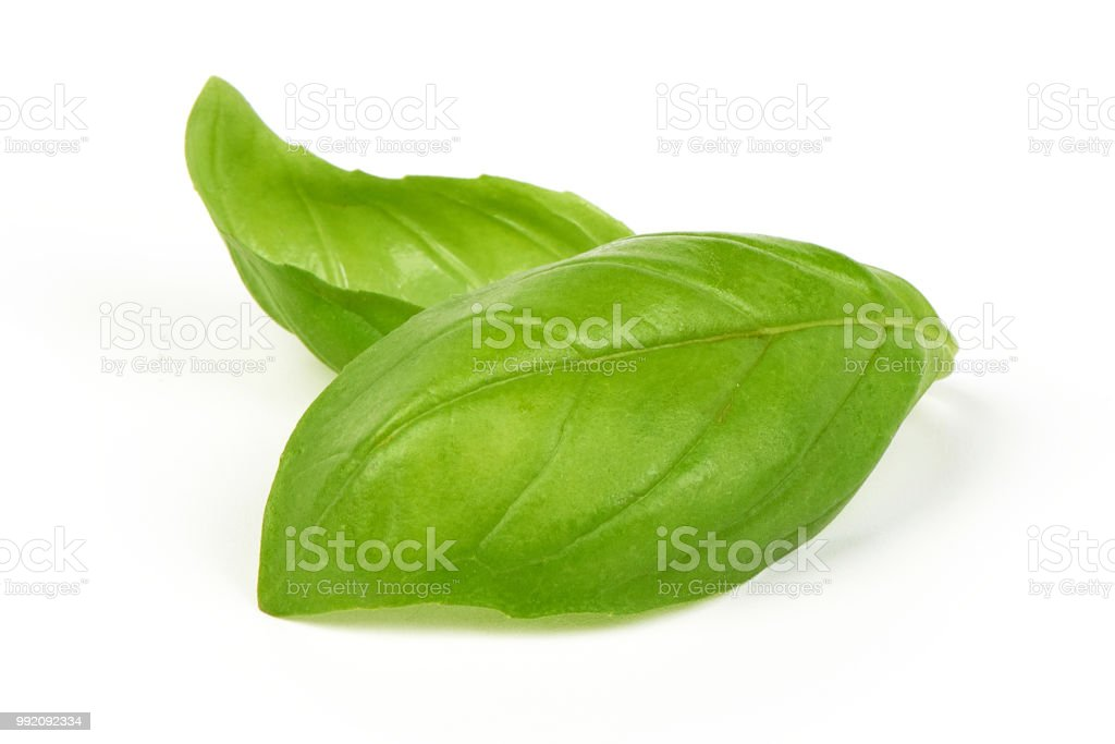 Sweet basil herb leaves bunch isolated on white background. Sweet...