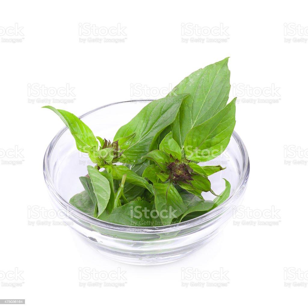 Sweet Basil isolated on a white background stock photo