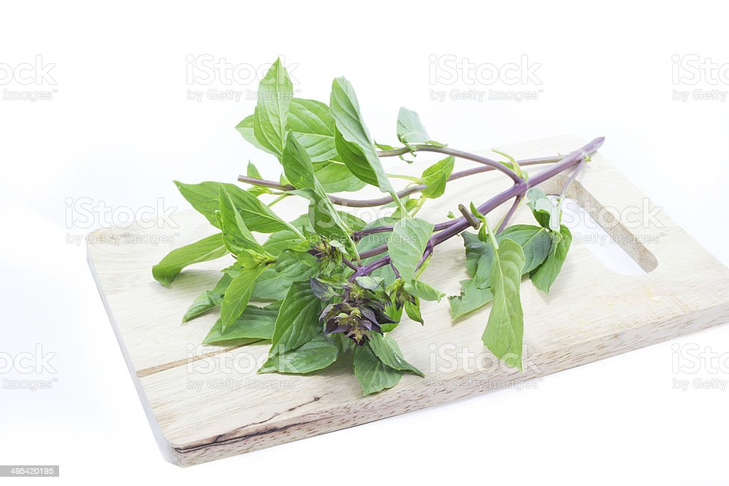 Sweet Basil on wood chopping board stock photo