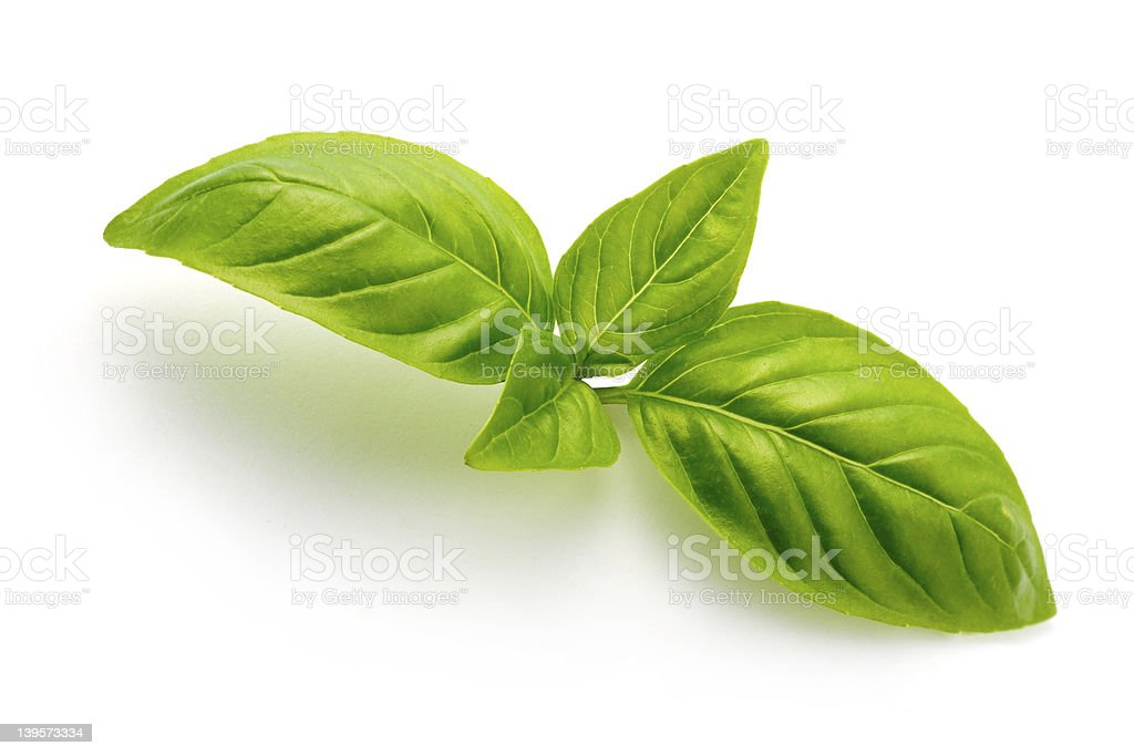 Sweet  basil royalty-free stock photo