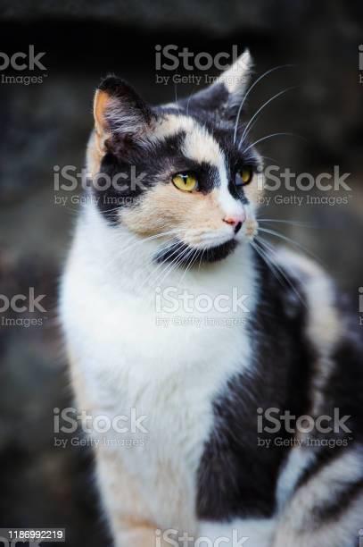 Sweet cat picture id1186992219?b=1&k=6&m=1186992219&s=612x612&h=dycs6zlpqhelmndiurswxyw9dlzclubcubegq9ua0mw=