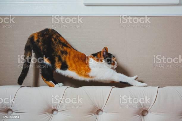Sweet cat picture id670146854?b=1&k=6&m=670146854&s=612x612&h=jl9clmmsw0vbzd9puwpe0ysvfuaeionkijzvxtja65c=