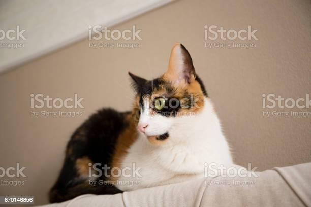 Sweet cat picture id670146856?b=1&k=6&m=670146856&s=612x612&h= cpvfoypc lja8vr1gyum3zkodpz1qcnjcvakadkgew=