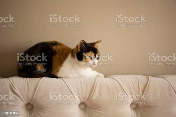 Sweet cat picture id670146860?b=1&k=6&m=670146860&s=612x612&h=l2ofzbd8lplaebp2 0wlxbayo6payygrar9vwkprrew=