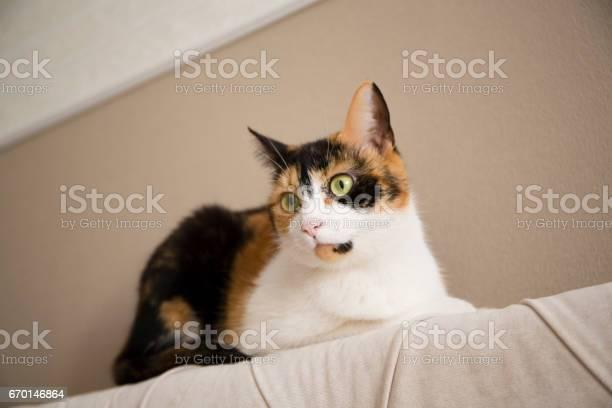 Sweet cat picture id670146864?b=1&k=6&m=670146864&s=612x612&h=lcp6wxnn9zmc6aluq2jo5kj3ara1vw8xc2xzg4duh4g=