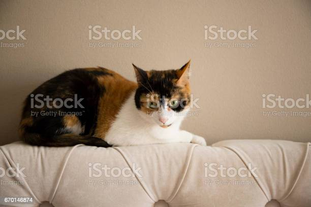 Sweet cat picture id670146874?b=1&k=6&m=670146874&s=612x612&h=dezmh2ow76fc8xn wuvz6h3thnqtieidnwgf8h8ijti=