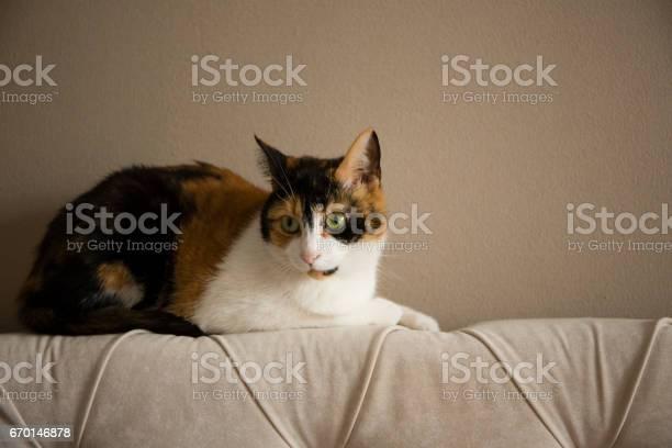 Sweet cat picture id670146878?b=1&k=6&m=670146878&s=612x612&h=pkhfhh3x 7br93odq98w4csvncbdcmd08q2nhwymqle=