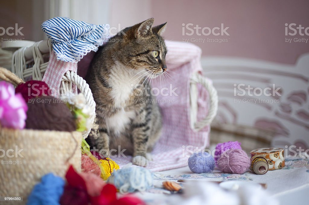 Sweet cat royalty free stockfoto