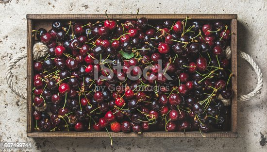 841659594 istock photo Sweet cherries in rustic wooden tray over light concrete background 667499744