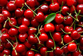 Freshly picked heap of cherries