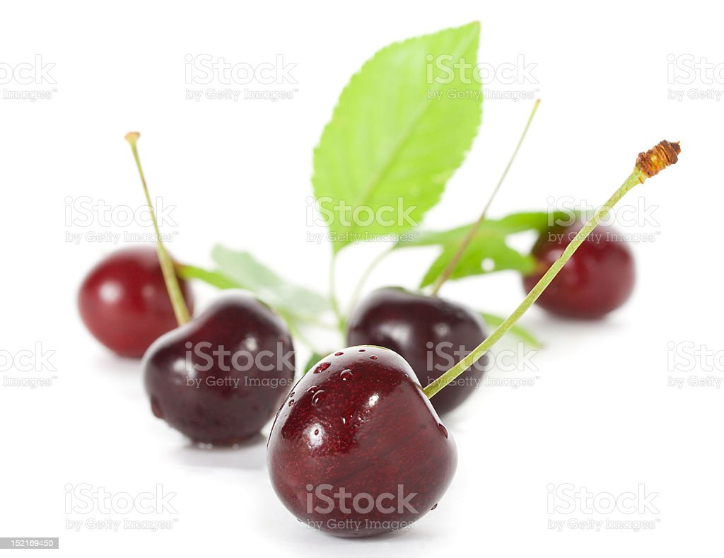 sweet cherries with leaves royalty-free stock photo