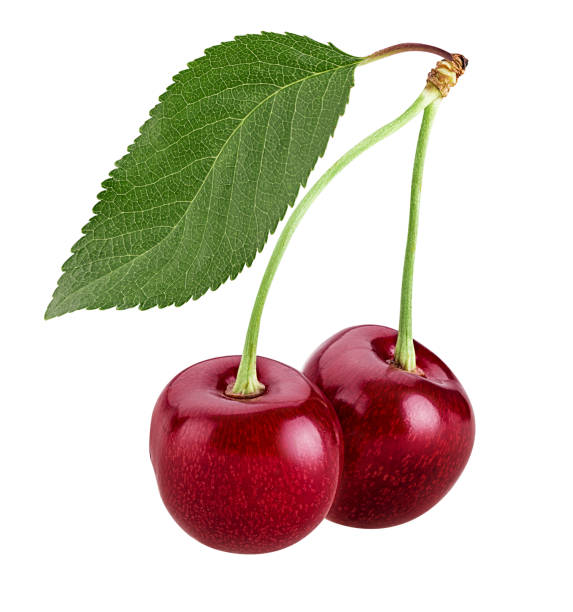 Sweet cherry berry, two on a branch with leaf stock photo
