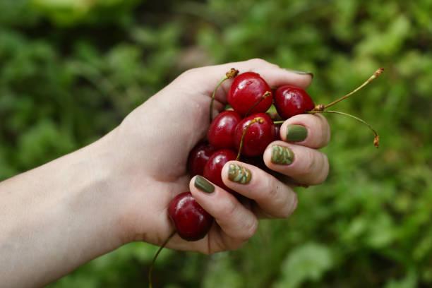 sweet cherry in human hand close up photo on green garden background - salud zdjęcia i obrazy z banku zdjęć