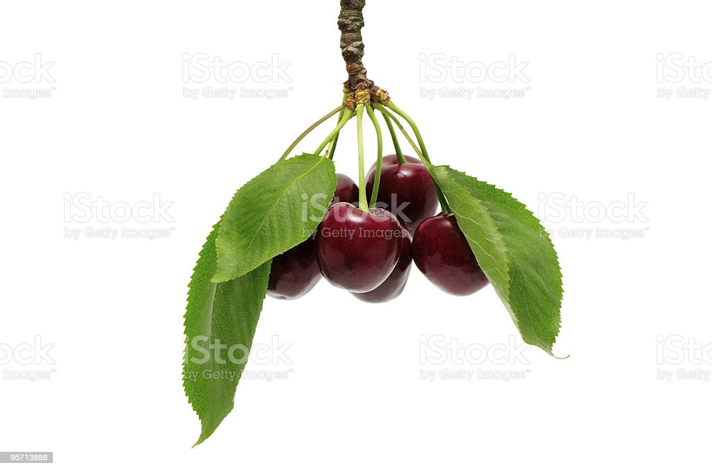 sweet cherry royalty-free stock photo