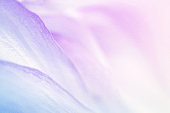 sweet color flower petals in soft color and blur style