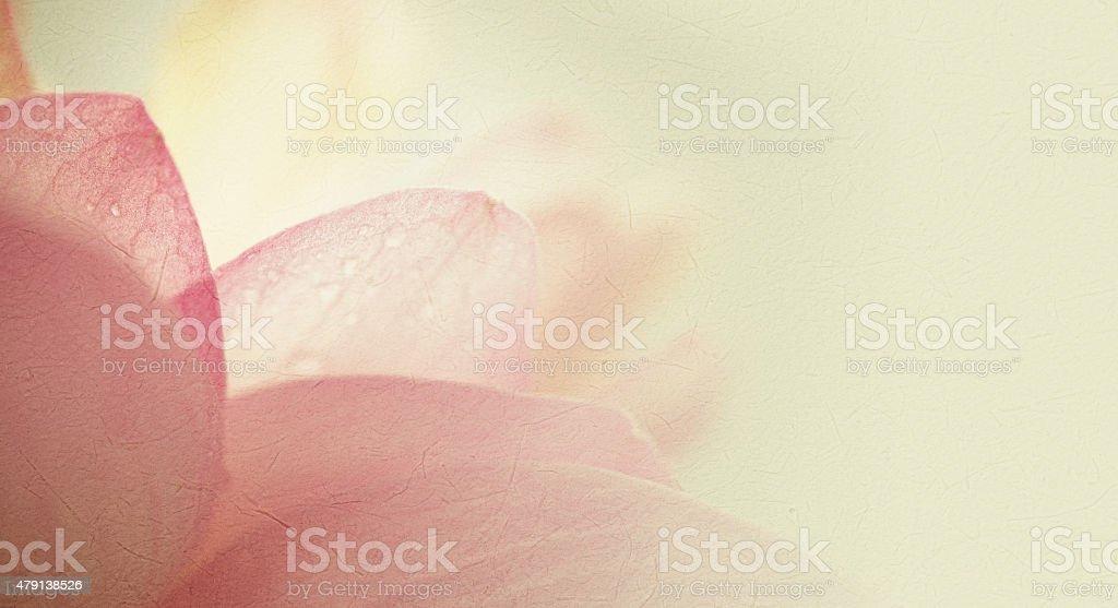 sweet couleur flou lotus dans un style sur la texture du papier de mûrier - Photo