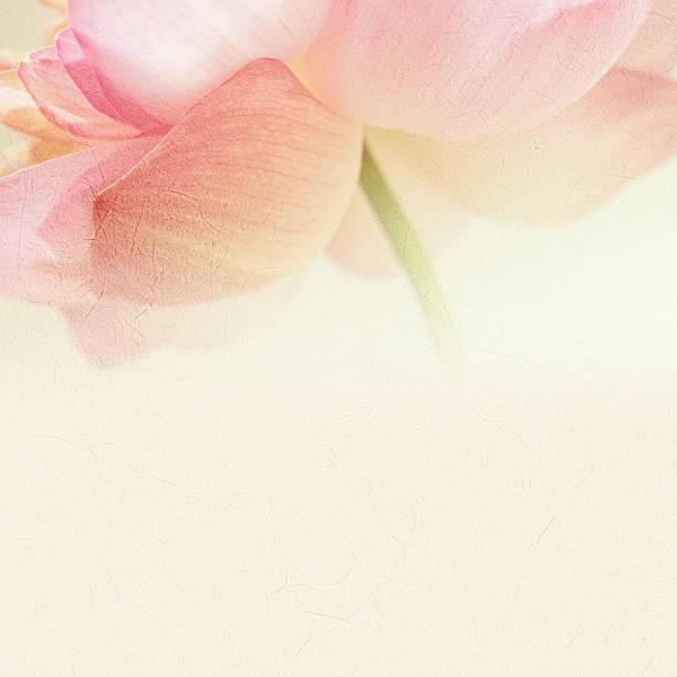Süße Farben lotus in blur Stil auf mulberry Papier Textur – Foto