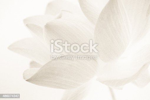 sweet color lotus in soft and blur style on mulberry paper texture background