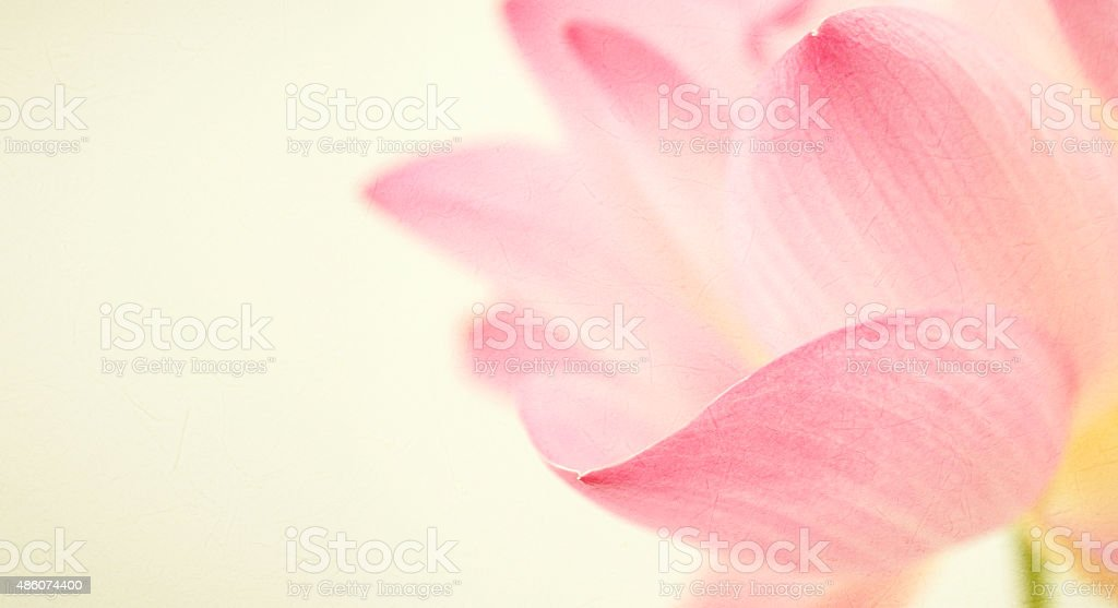 sweet color lotus in soft and blur style stock photo