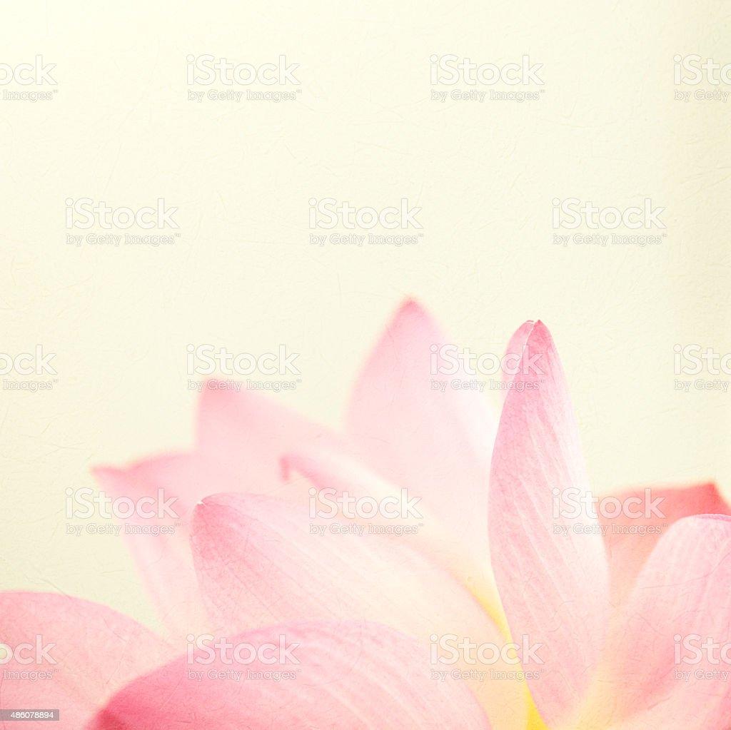 Couleur douce lotus doux et blur style - Photo