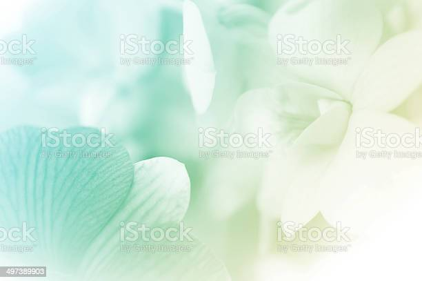 Sweet color orchids in soft style picture id497389903?b=1&k=6&m=497389903&s=612x612&h=qadg1aa7celzd3dsoezgpdtj8gapywlcgavbgc75otg=