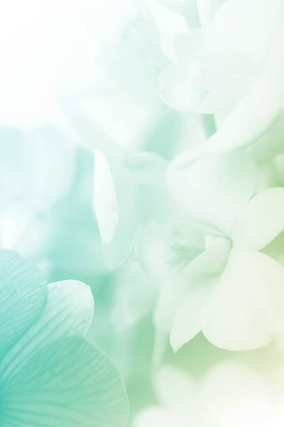 Süße Farben Orchideen aus weichem Stil – Foto