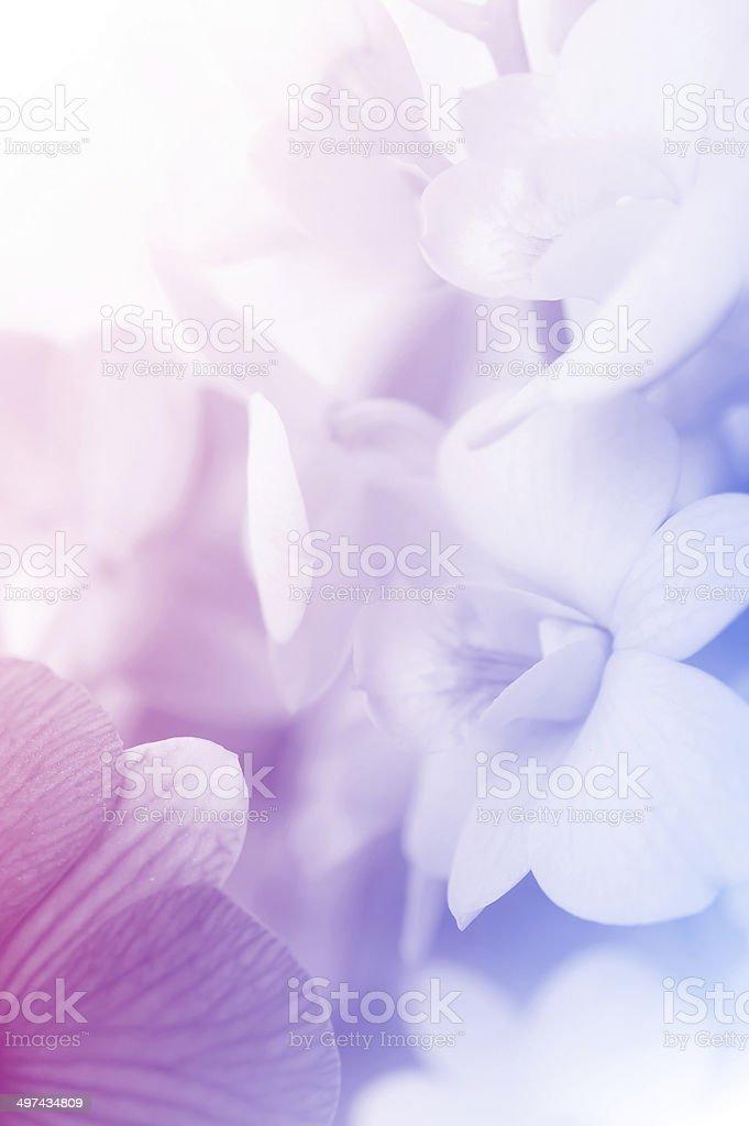 sweet couleur des orchidées dans un style - Photo