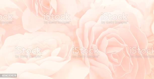 Sweet color roses flower in blur style for background pattern picture id639030828?b=1&k=6&m=639030828&s=612x612&h=eraj jguzjqcm0xprtztqbuxqx08nx mfvorwpxkblo=