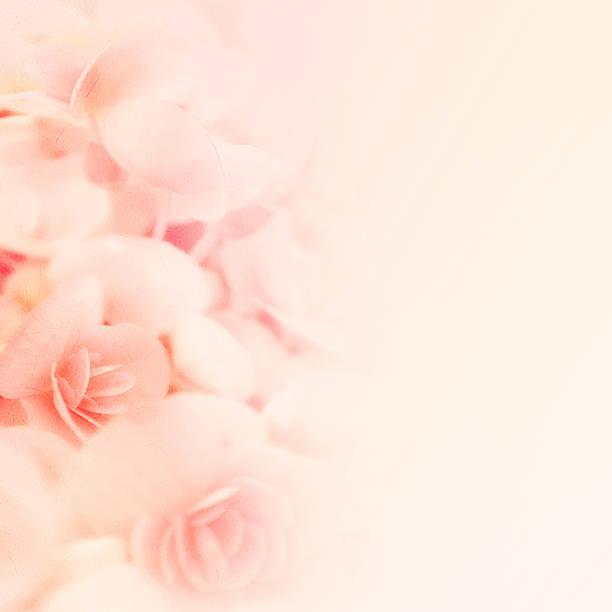 süße farben rosen in blur stil auf mulberry papier textur - coral and mauve stock-fotos und bilder